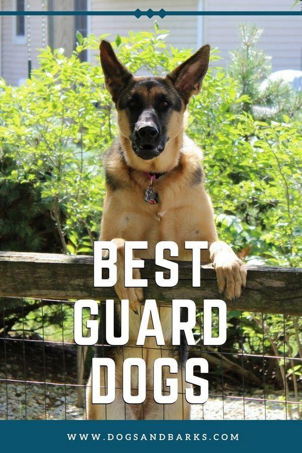 Cei mai buni câini de pază