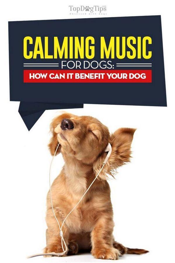 Calm muzica pentru caini - ce este si cum poate fi de folos cainele tau