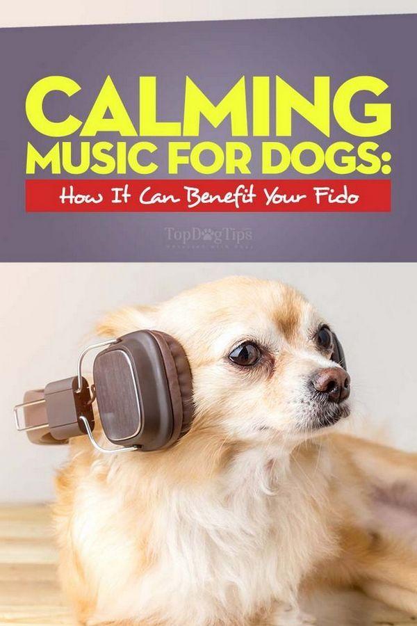 Calming Music pentru câini - Ce este și cum poate beneficia câinele tău