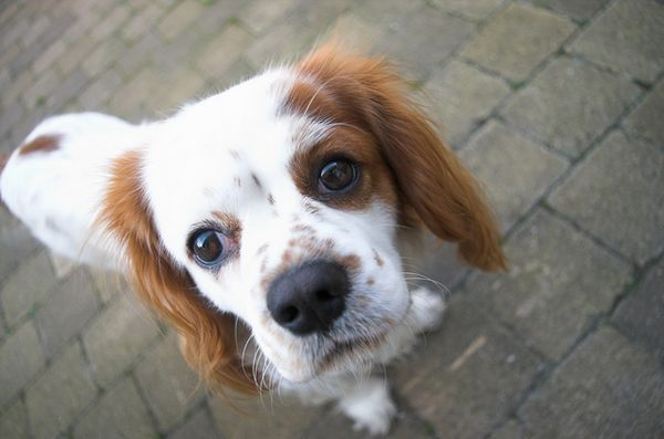 Câinii pot fi rasiști?