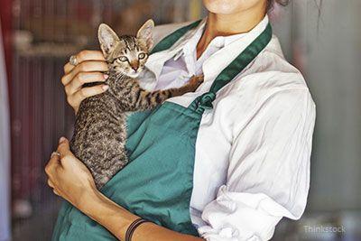 Voluntar care deține un adăpost pisică