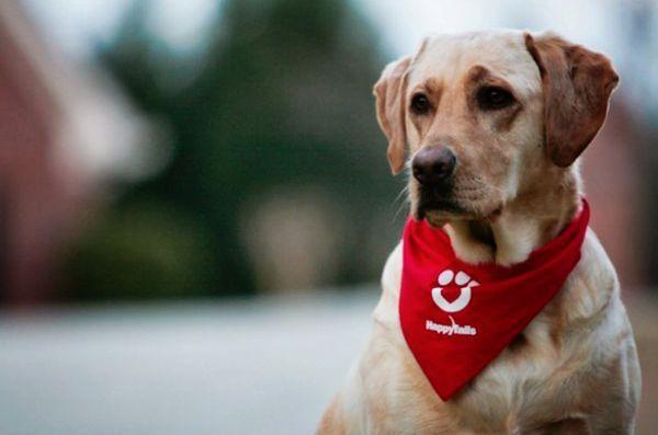 Pot câinii terapeutici să ajute medicamentele mai mici pentru copiii pre-op?