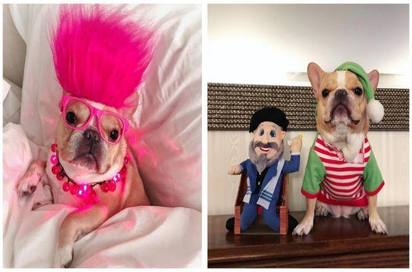 National-dress-ta-Pet-up-Day-6