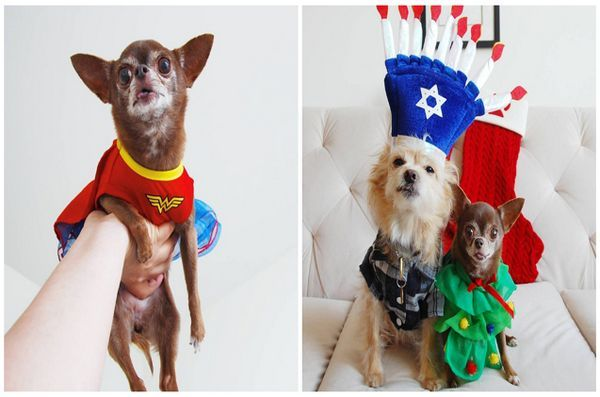 National-dress-ta-Pet-up-Day-4