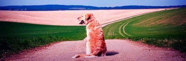 Creioane pentru câini - nevoia și beneficiul aplicației