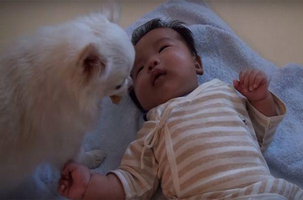 Copilul plâns a oferit un tratament de câine interesat [video]