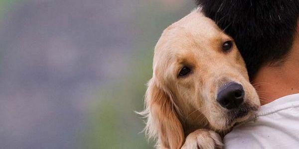 Câinii au sentimente? Știința are răspunsul