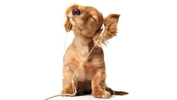 câinii ca muzica