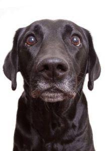 Dominația câinelui: cum îl puteți folosi pentru a instrui mai mulți câini