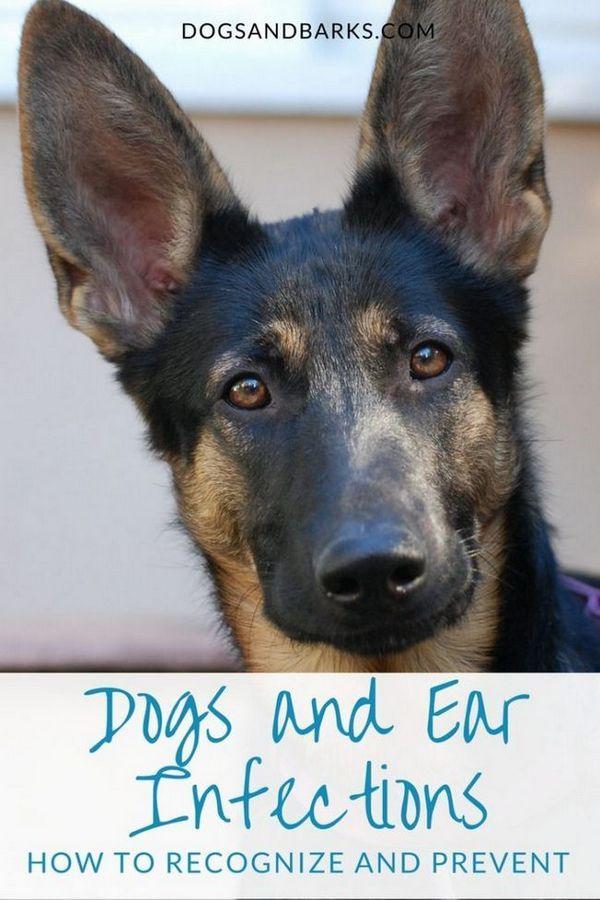 Câini și infecții ale urechii