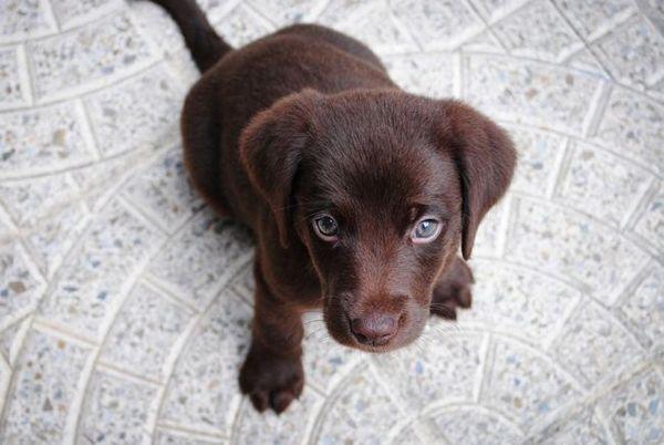 câine expresii