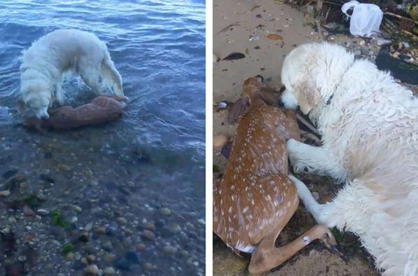 Câinele preia căpriorul înecat, salvând viața bețivului [video]