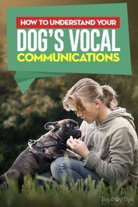 Sunete câine: Care este câinele dvs. vă spun?