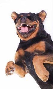 Înțelegerea sunetelor câinilor