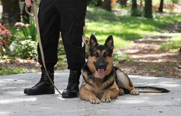 Certificarea trainerului de câine: ghid pentru începători