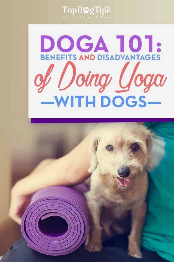 Doga 101: beneficii și precauții de a face yoga cu câini