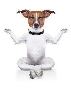 Ce este Doga - Yoga cu câini