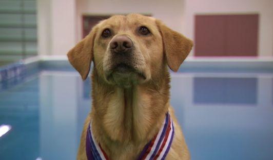 Câinii ne comunică folosind expresii faciale
