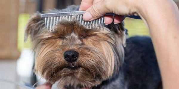 Curele de par premium pentru câini merită