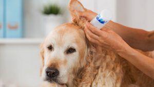 Prevenirea acarienilor la câini