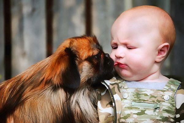 Produse esențiale de câine pentru proprietarii de câini cu copii