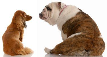 fibră pentru câini