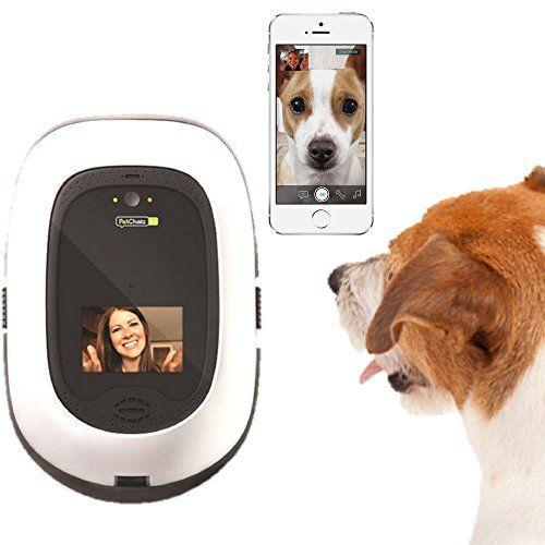 Giveaway: petchatz hd camera de companie (valoare 380 dolari)
