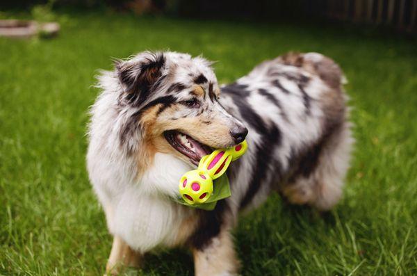 Expoziția internațională pentru animalele de companie 2017: pleoasa exterioară a câinilor de companie