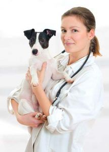 Grijă holistică pentru câini: ghidul final bazat pe dovezi