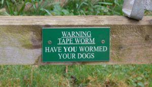 Cum câinii primesc viermi