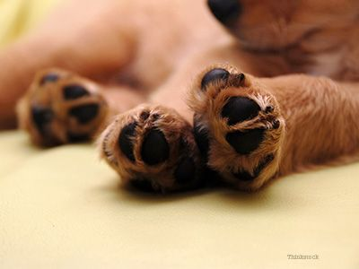 Puppy puppy