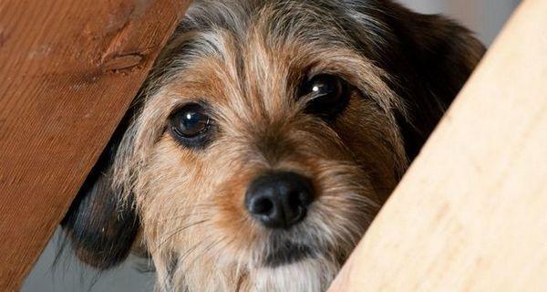 Cum își pierd proprietarii încrederea câinilor