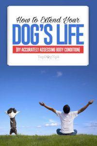 Sfaturi privind modul de a extinde viața câinelui dvs. prin evaluarea precisă a stării corpului