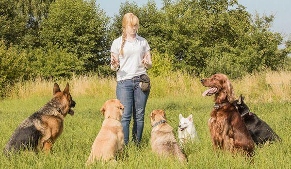 Cum să găsești un antrenor de câine bun