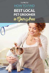 Cum de a găsi groomers locale câine în zona dumneavoastră
