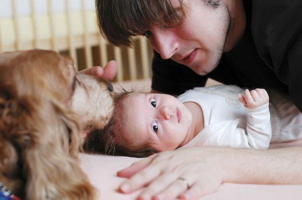 Cum să vă introduceți câinele unui nou copil