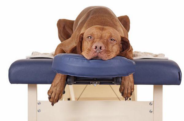 Cum să stăpânești arta masajului câinelui