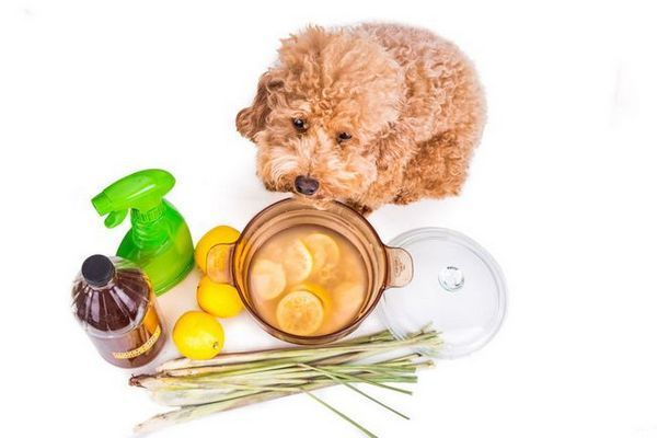 acasă remedii pentru viermi de câine