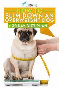 Cum sa sleim un câine supraponderal (plan de dieta de 30 de zile)