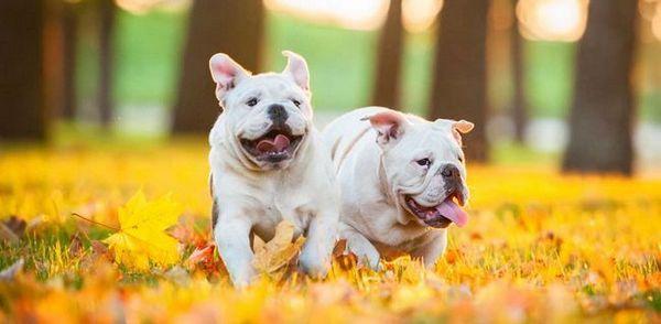 Exercitarea câinilor supraponderali