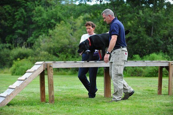 Cum să începeți o afacere de formare a câinilor