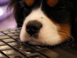 Cum de a lansa o companie de companie legate de animale de companie