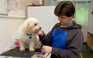 Cum de a scrie un plan de afaceri de îngrijire a câinilor