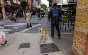 Cum să scrieți un plan de afaceri pentru îngrijirea câinilor