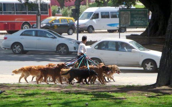 Cum de a scrie un plan de afaceri de câine de mers pe jos