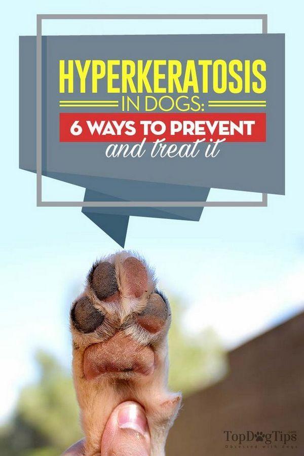 Hyperkeratoza la câini: 6 moduri de a preveni și de a le trata