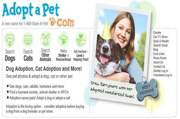 Vă interesează animalele pentru adopție? Adoptapet are mii de căutători pentru o casă veșnică