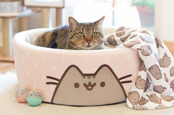 Internet de grăsime pisica senzație de colectare pushheen vine la petco