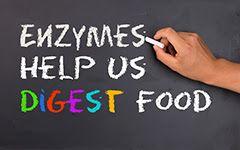 enzimele ne ajută să digerăm alimentele