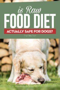 Este dieta hrănitoare pentru câini